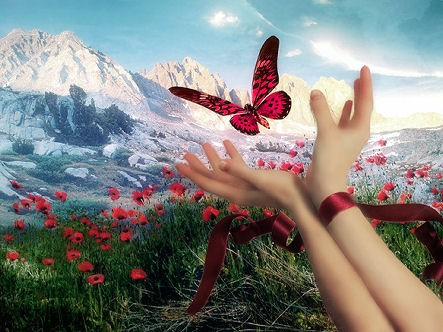 butterflyld0yq2.jpg